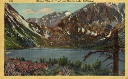 Convict Tree - Convict Lake, California CA Postcard
