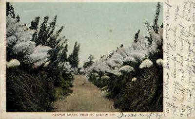 Pampas Grass - Fresno, California CA Postcard