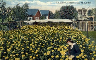 A California Backyard - MIsc Postcard