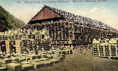 Pigeon Ranch - Los Angeles, California CA Postcard