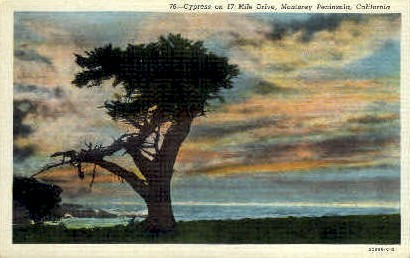 Cypress on 17 Mile Drive - Monterey Peninsula, California CA Postcard