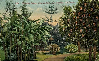 Banana Palms - Los Angeles, California CA Postcard