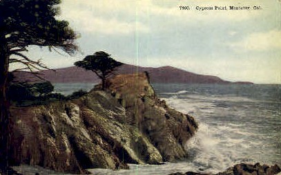 Cypress Point - Monterey, California CA Postcard