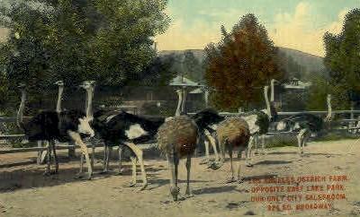 Ostrich Farm - Los Angeles, California CA Postcard