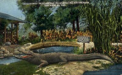 Okeechobee, California Alligator Farm - Los Angeles Postcard
