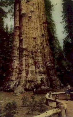 Sequoia National Park - Fresno, California CA Postcard