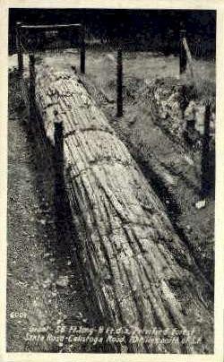 Real Photo, Giant Petrified Tree - Santa Rosa, California CA Postcard
