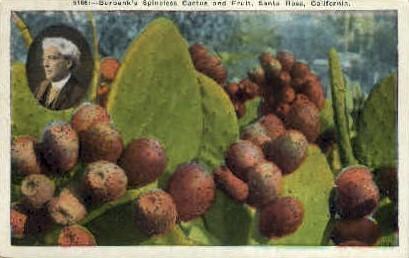 Burbank's Spineless Cactus & Fruit - Santa Rosa, California CA Postcard