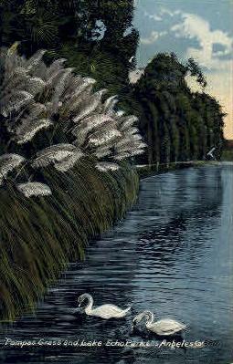 Pampas Grass & Lake Echo Park - Los Angeles, California CA Postcard