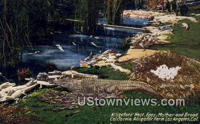 California Alligator Farm - Los Angeles Postcard