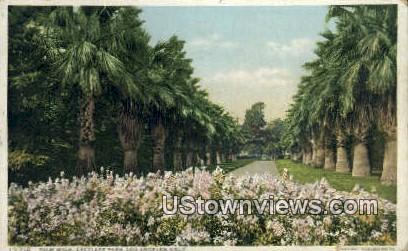 Palm Walk, Eastlake Park - Los Angeles, California CA Postcard