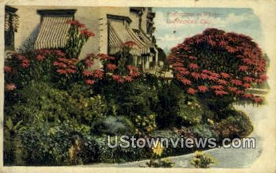 Poinsettias - Los Angeles, California CA Postcard