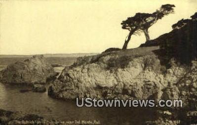 The Ostrich - Del Monte, California CA Postcard