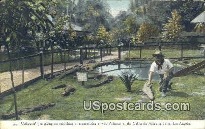 Alligators, California Alligator Farm - Los Angeles Postcard