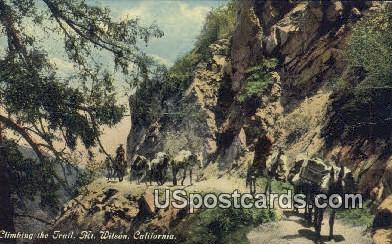 Climbing the Trail - Mt. Wilson, California CA Postcard