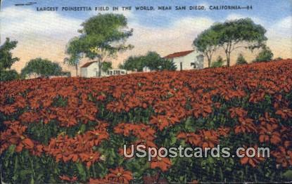 Largest Poinsettia Field in the World - San Diego, California CA Postcard