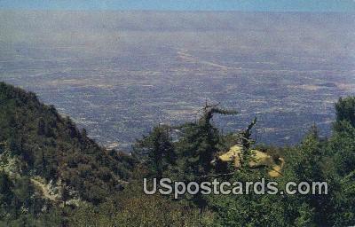Mount Wilson Resort - Mt. Wilson, California CA Postcard