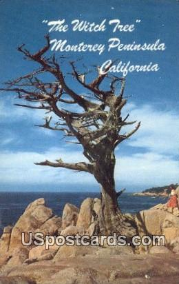 Witch Tree, Seventeen Mile Drive - Monterey Peninsula, California CA Postcard