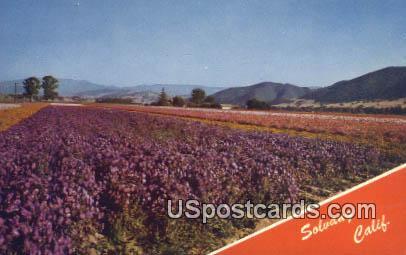 Solvang, California, Postcard       ;       Solvang, CA
