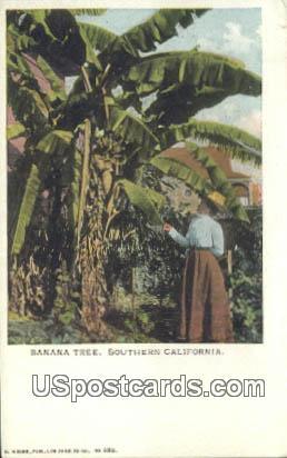 Banana Tree - Southern California Postcards, California CA Postcard