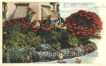 Poinsettias, Hotel Hollywood - Los Angeles, California CA Postcard
