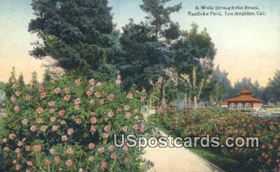Roses, Eastlake Park - Los Angeles, California CA Postcard