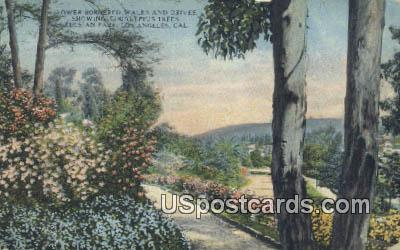 Eucalyptus Trees, Elysian Park - Los Angeles, California CA Postcard
