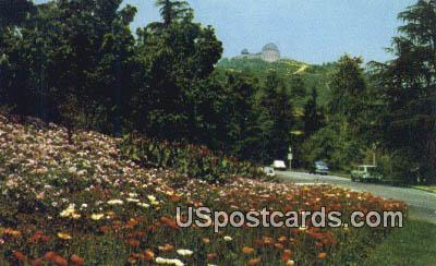 Fern Dell Drive - Los Angeles, California CA Postcard