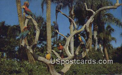 Parrot Tree - Los Angeles, California CA Postcard