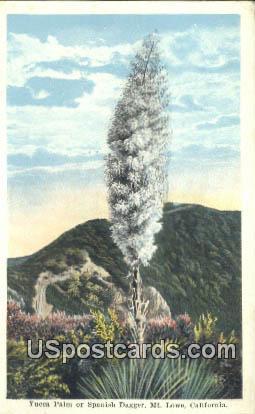Yucca Palm - Mt. Lowe, California CA Postcard