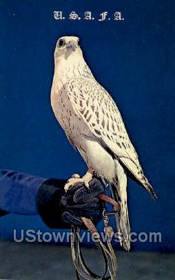 Falcon Prepared for Flight - Colorado Springs Postcards, Colorado CO Postcard
