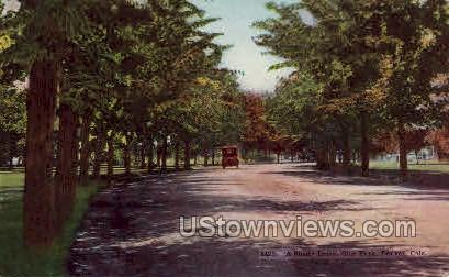 Shady Drive, City Park - Denver, Colorado CO Postcard
