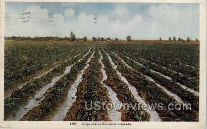 Irrigation in Northern Colorado - Misc Postcard