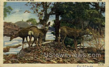 The Deer are Plantiful here - Misc, Colorado CO Postcard