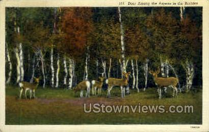 Deer among the Aspens - Misc, Colorado CO Postcard