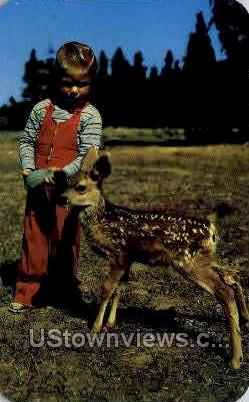 Deer Fawn and Child - Misc, Colorado CO Postcard