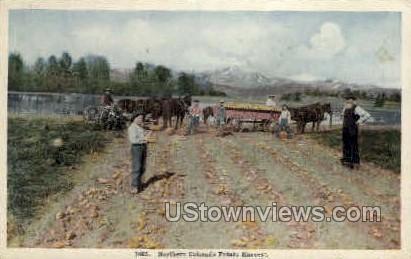 Potato Harvest - Misc, Colorado CO Postcard