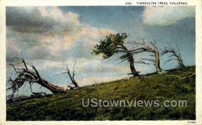 Timberline Trees - Misc, Colorado CO Postcard