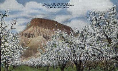 Peach Orchard  - Misc, Colorado CO Postcard