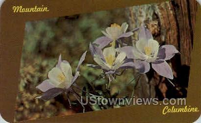 Mountain Columbines - Misc, Colorado CO Postcard