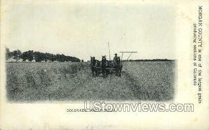 Wheat Field - Misc, Colorado CO Postcard