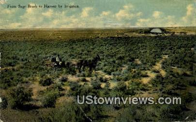 Sage Brush - Pueblo, Colorado CO Postcard