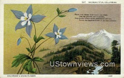 Columbine Flower - Misc, Colorado CO Postcard
