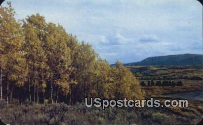 Indian Summer - Rocky Mountains, Colorado CO Postcard