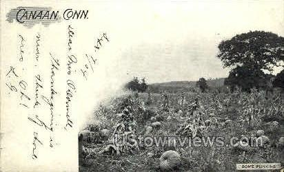 Some Punkins - Canaan, Connecticut CT Postcard