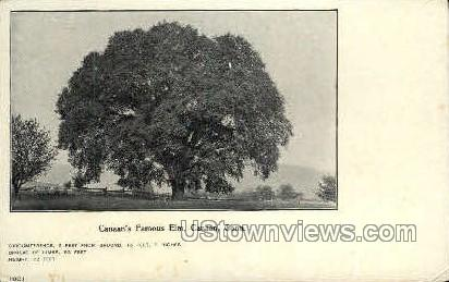 Elm - Canaan, Connecticut CT Postcard