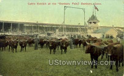 Cattle Exhibit - Danbury, Connecticut CT Postcard