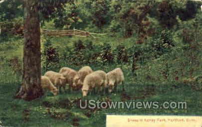 Sheep, Keney Park - Hartford, Connecticut CT Postcard