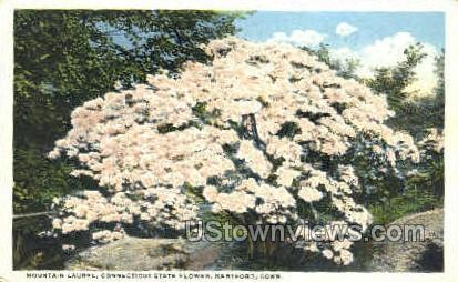 Mountain Laurel - Hartford, Connecticut CT Postcard