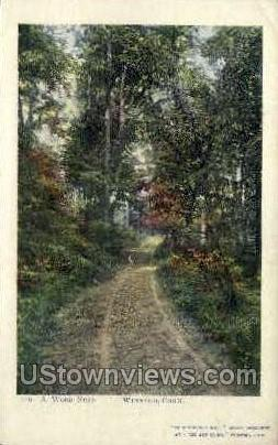 A Wood Road - Winsted, Connecticut CT Postcard